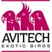 AviTech